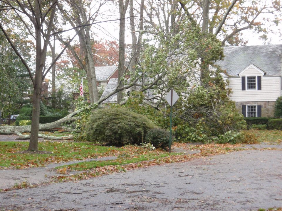 My neighborhood hath survived the wrath of Hurricane Sandy!